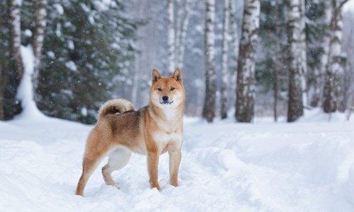 ZOOmania - Jak zadbać o czworonogi zimą?