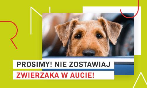 Nie zostawiaj psa w aucie!